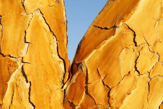 Quiver Tree Bark-Richard Du Toit-Photographic Print