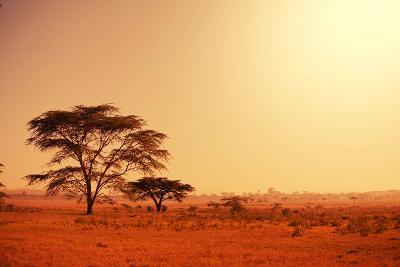 Quiver Tree in Namibia, Africa-Galyna Andrushko-Photographic Print
