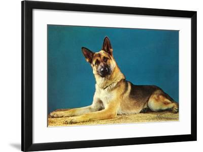 Quizzical German Shepherd-Found Image Press-Framed Photographic Print