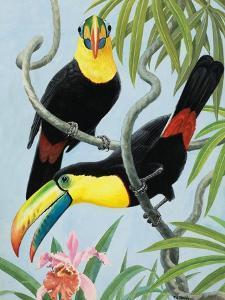 Big-Beaked Birds by R.B. Davis