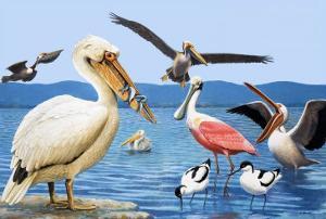 Birds with Strange Beaks by R. B. Davis