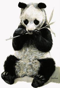 Panda by R. B. Davis