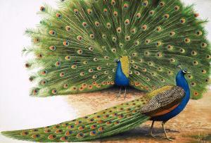 Peacocks by R. B. Davis