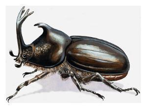 Stag Beetle, 1966 by R. B. Davis