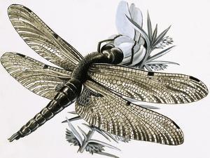 The Dragonfly by R. B. Davis