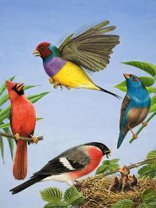 Tropical Birds by R. B. Davis