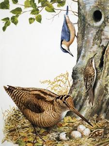 Woodland Birds by R. B. Davis