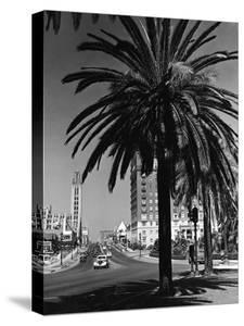View of Wilshire Boulevard, Los Angeles by R Gates
