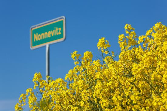 RŸgen, Rape in Front of Blue Sky, Town Sign Nonnevitz-Catharina Lux-Photographic Print