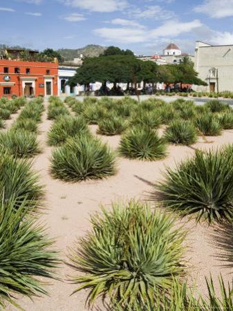 Agave Plants Used for Making Mezcal, Oaxaca City, Oaxaca, Mexico, North America by R H Productions