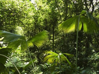 Rainforest Vegetation, Hanging Bridges Walk, Arenal, Costa Rica, Central America by R H Productions