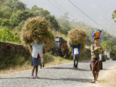 Tansporting Animal Feed, Near Sao Jorge Dos Orgaos Botanical Garden, Santiago, Cape Verde Islands by R H Productions