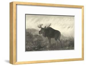 American Moose by R^ Hinshelwood