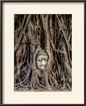 Head of Buddha Statue in the Tree Roots, Ayutthaya, Thailand by R M Nunes