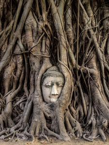 Head of Buddha Statue in the Tree Roots, Ayutthaya, Thailand by R.M. Nunes