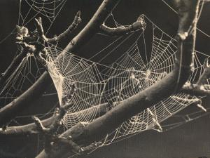 Spider's Web Amongst the Branches of a Tree by R. Zorno