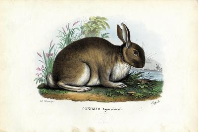 Rabbit, 1863-79-Raimundo Petraroja-Giclee Print