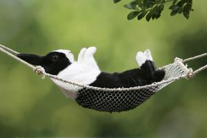 Rabbit in a Hammock at Easter