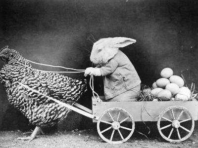 Rabbit in Hen Cart--Photographic Print