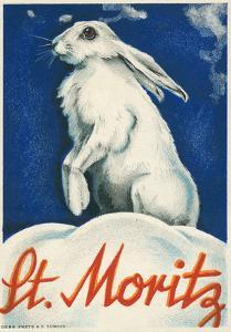 Rabbit in Snow, St. Moritz