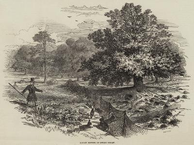 Rabbit Netting in Epping Forest--Giclee Print