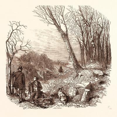 Rabbit Shooting, Rabbits--Giclee Print