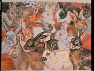 https://imgc.artprintimages.com/img/print/rabbit-spread_u-l-pjct1d0.jpg?p=0