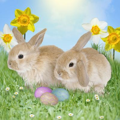 Rabbit with Easter Eggs and Daffodils--Photographic Print