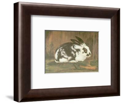 Rabbit--Framed Art Print