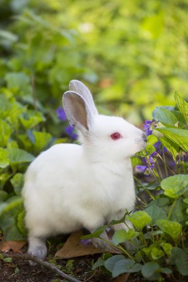 Rabbit--Photographic Print