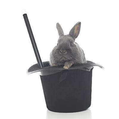 Rabbits 002-Andrea Mascitti-Photographic Print