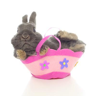 Rabbits 003-Andrea Mascitti-Photographic Print