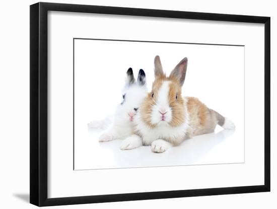 Rabbits 006-Andrea Mascitti-Framed Photographic Print