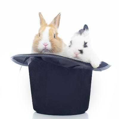 Rabbits 014-Andrea Mascitti-Photographic Print