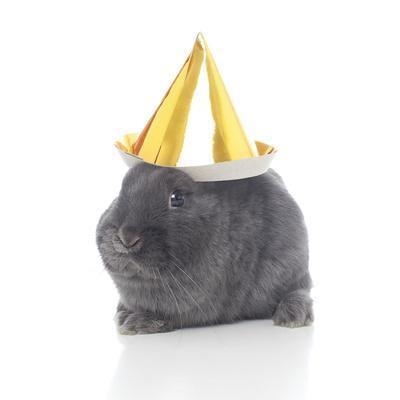 https://imgc.artprintimages.com/img/print/rabbits-022_u-l-q10pgeb0.jpg?artPerspective=n