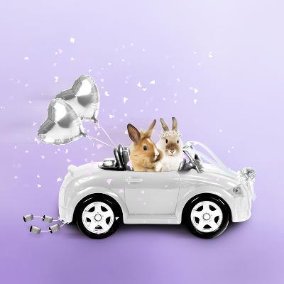 Rabbits Driving Wedding Car--Photographic Print