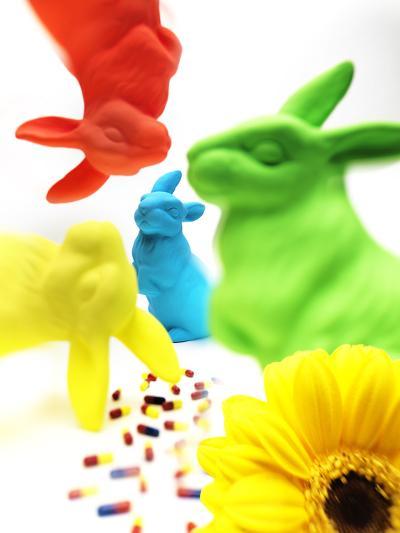 Rabbits, Flower, and Pills-Graeme Montgomery-Photographic Print