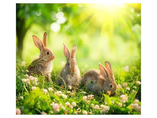 Rabbits Sunny Flower Meadow--Art Print