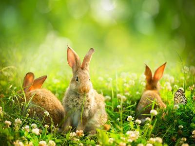Rabbits-Subbotina Anna-Photographic Print