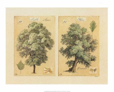 ?rable et Ch?ne-Laurence David-Art Print