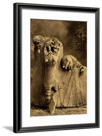 Raccoon Family--Framed Art Print