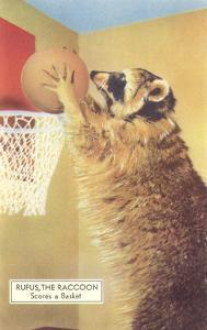 Raccoon Playing Basketball