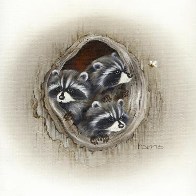 Raccoons in Hole-Peggy Harris-Giclee Print