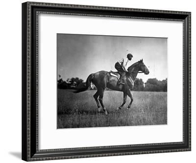 Race Horse Man O' War--Framed Premium Photographic Print