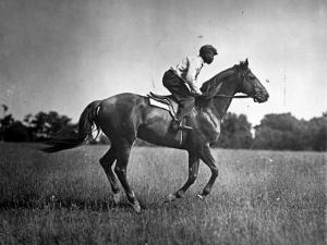 Race Horse Man O' War
