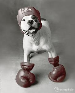 Boxing Dog by Rachael Hale