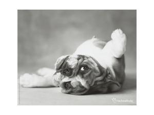 Britdog 2 by Rachael Hale