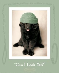 Can I Look Yet by Rachael Hale