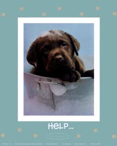 Help by Rachael Hale