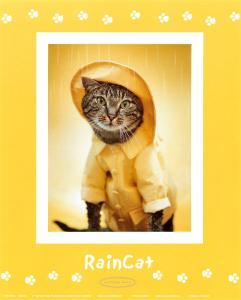 Rain Cat by Rachael Hale